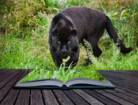 Creative image of black jaguar prowling into pages in book photo