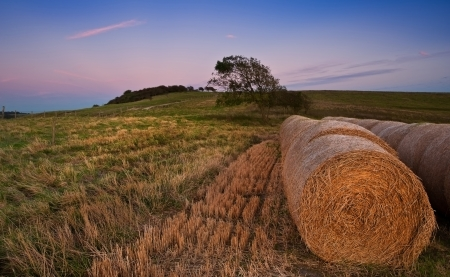 Sunset over hay bales in agricultural landscape Stock Photo - 15780213