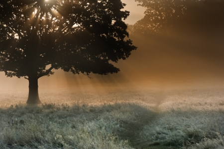 Foggy landscape is lit up at sunrise by sunbeams pouring through frosty landscape photo