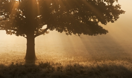 Foggy landscape is lit up at sunrise by sunbeams pouring through frosty landscape Stock Photo