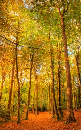 Beautiful landscape image of forest covered in Autumn Fall color contrasting green and orange, brown and gold photo