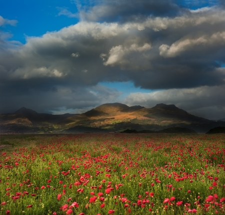 Mountain range landscape with field ofwild poppies under dramatic sky Stock Photo - 16217370