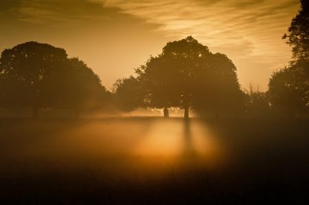 Rising sun illuminates fog from underneath making fog glow eerily Stock Photo - 16217381