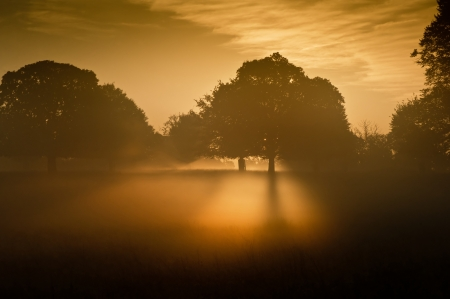 Rising sun illuminates fog from underneath making fog glow eerily Stock Photo - 16217381