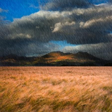 gust: Mountain range landscape with field ofwheat blowin wind under dramatic sky