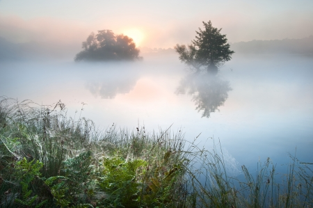 birds lake: Fog mist landscpae over lake in Autumn Fall with vibrant colors