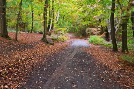 copse: Beautiful landscape image of forest covered in Autumn Fall color contrasting green and orange, brown and gold Stock Photo