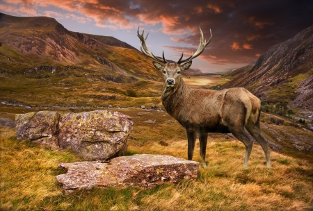 Dramatic sunset with beautiful sky over mountain range giving a strong moody landscape and red deer stag looking strong and proud Standard-Bild