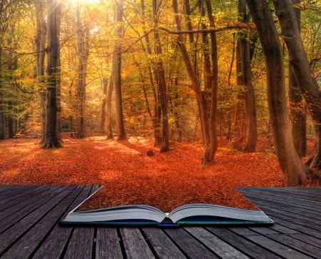 Creative concept image if Autumn Fall forest in pages of book Foto de archivo