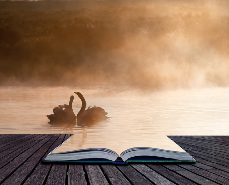 mated: Creative concept image of romantic scene of mated pair of swans in pages of book