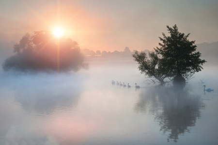 Family of swans swim across misty foggy Autumn Fall lake at sunrise Stock Photo