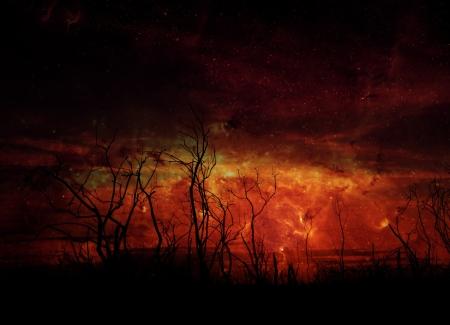 Stark tree silhouette against night sky   Stock Photo