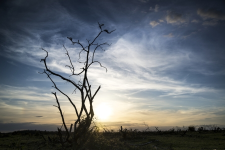 stark: Stark bush silhouette against stunning sunset sky
