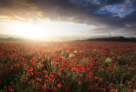 Beautiful landscape image of Summer poppy field under stunning sunset sky photo