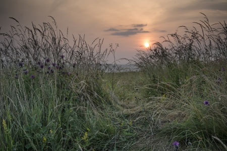 Landscape view through uncultivated verge in countryside to rising sun photo