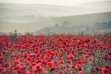 Beautiful Summer sunrise countryside field of poppies landscape with differential focus and shallow depth of field photo