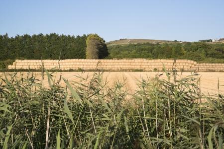 grass verge: Pila di balle di fieno viste attraverso selvaggio paesaggio sull'orlo