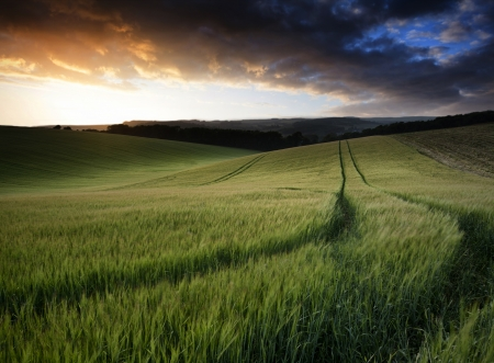 Beautiful Summer landscape of field of growing wheat crop during sunset photo