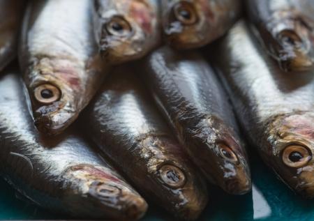 Fresh sprats fish on serving dish Stock Photo - 22676367
