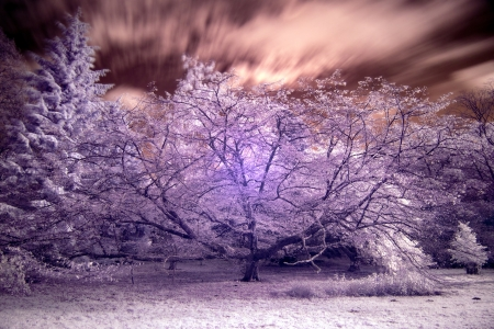 infra red: Beautiful infra red landscape forest image Stock Photo