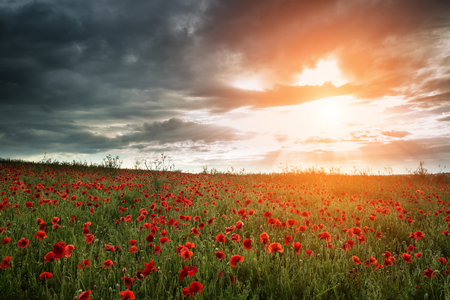 Beautiful poppy field landscape during Summer sunset with dramatic sky photo