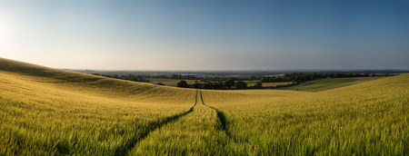 Stunning countryside panorama landscape wheat field in Summer sunset photo