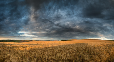 Stunning countryside landscape wheat field in Summer sunset photo