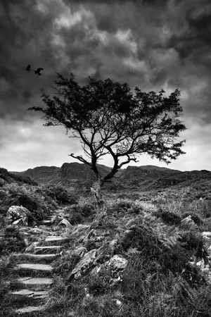 Solitary tree on mountain landscape in black and white photo