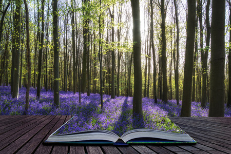 storytelling: Creative concept image Beautiful landscape of Spring bluebells in forest