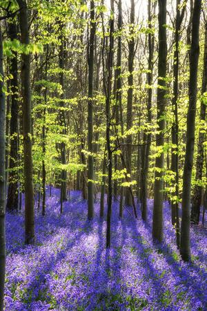 Mooi landschap van klokjes van de lente in het bos