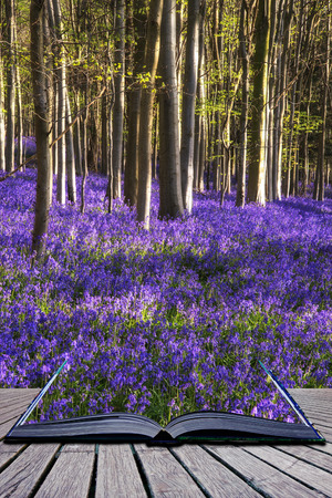 nautral: Creative concept image Beautiful landscape of Spring bluebells in forest