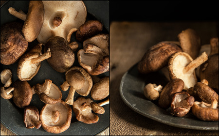compilation: Compilation of images of shiitake mushrooms on vintage style metal plate Stock Photo