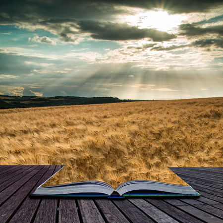 of pano: Stunning countryside landscape wheat field in Summer sunset conceptual book image