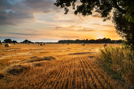 harvest: Beautiful Summer sunset over field of hay bales in countryside landscape