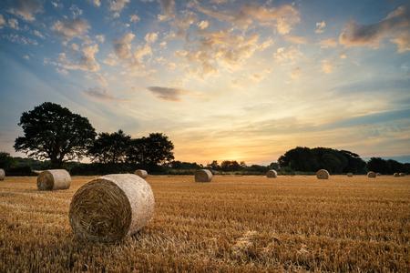 Mooie Zomer zonsondergang over veld van hooibalen in het landschap van