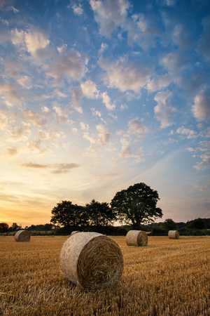 hay bales: Beautiful Summer sunset over field of hay bales in countryside landscape