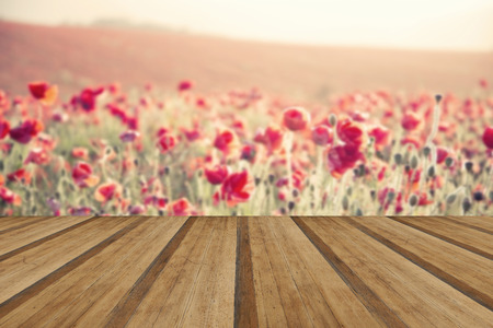 cross processed: Beautiful landscape image of Summer poppy field under stuning sunset sky with cross processed retro effect with wooden planks floor