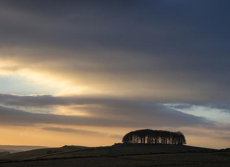 copse: Trees on horizon landscape at sunset silhouette