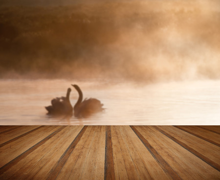mated: Touching romantic scene of mated pair of swans on foggy misty lake with wooden planks floor Stock Photo