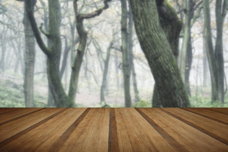 Autumn landscape of trees in forest in dense fog with wooden planks floor Stock Photo