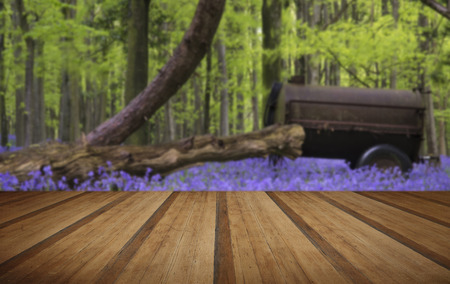 farm machinery: Old farm machinery in bluebell flowers in Spring forest landscape with wooden planks floor