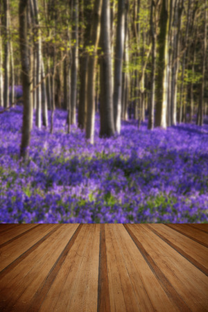 nautral: Beautiful landscape of Spring bluebells in forest with wooden planks floor