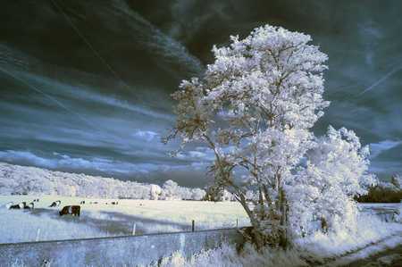 ir: Stunning unique infra red landscape with false color impact