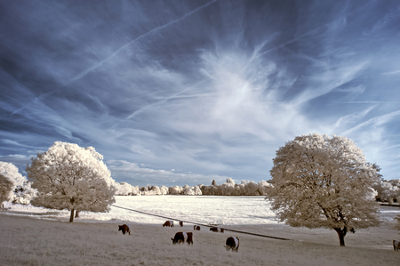 infra: Stunning unique infra red landscape with false color impact