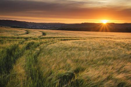 agricultura: Hermoso paisaje de la puesta del sol del verano sobre los campos de cultivos agrícolas