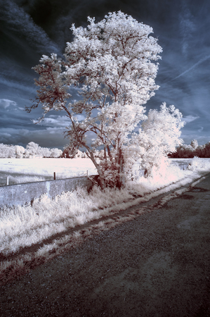 infra red: Stunning unique infra red landscape with false color impact