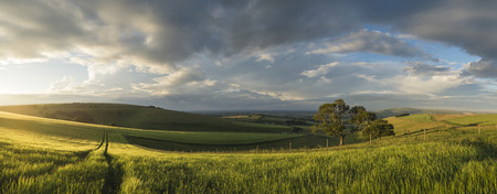 south downs: Stunning panorama landscape South Downs countryside in Summer