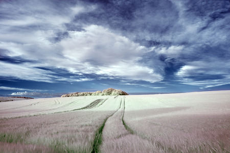 specialised: Surreal false color infrared Summer landscape over agricultural fields Stock Photo
