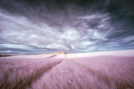 english countryside: Surreal false color infrared Summer landscape over agricultural fields Stock Photo