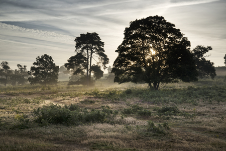english countryside: Foggy landscape during sunrise in English countryside landscape